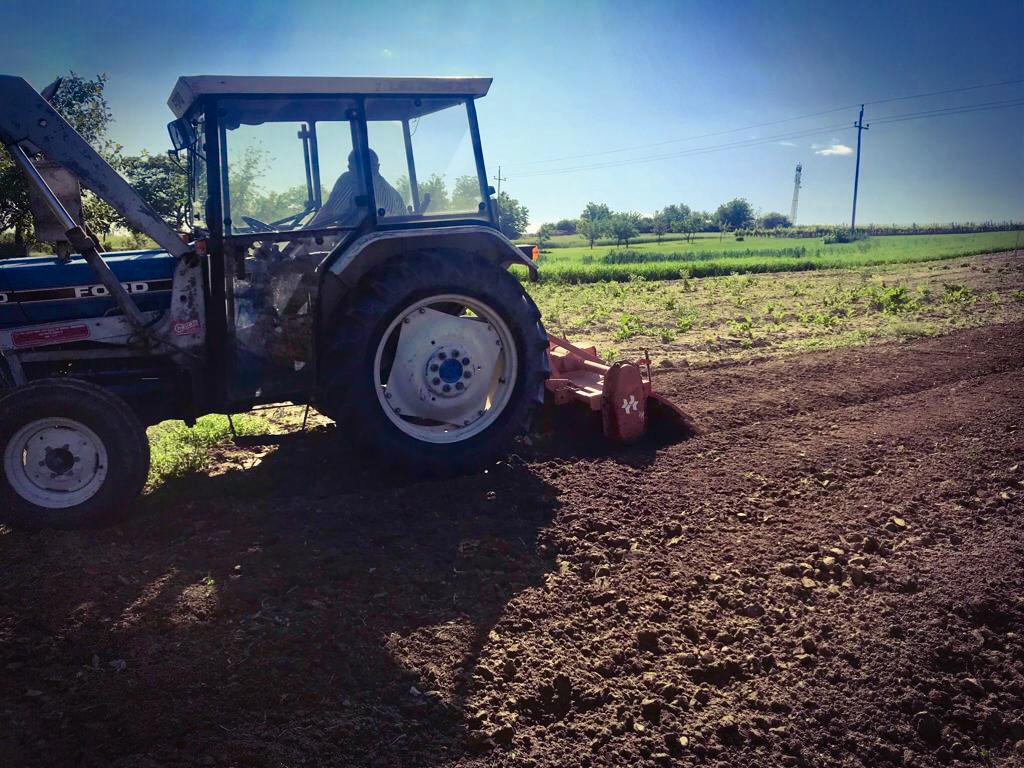 Beim Anpflanzen von Süßkartoffel