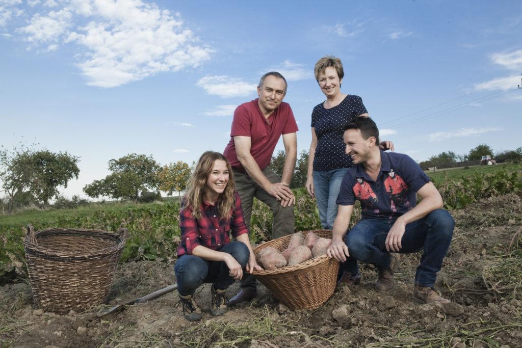 Süßkartoffel selbst pflanzen