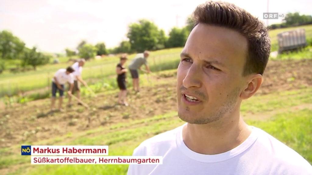 Markus Habermann Süßkartoffel